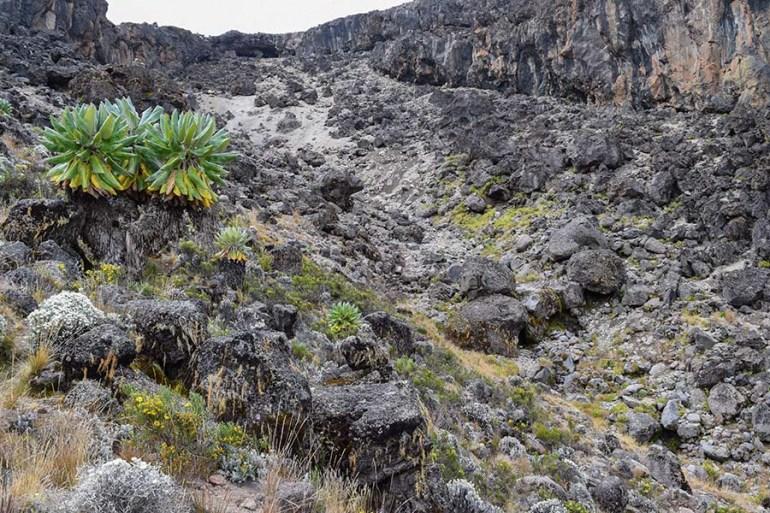 Kilimanjaro dessert