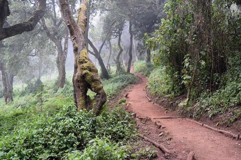 Kilimanjaro trail condition