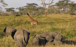 Tanzania Budgeti Safari